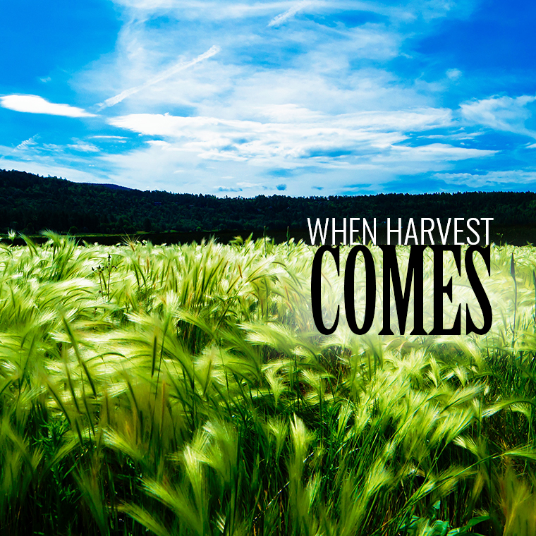 When Harvest Comes